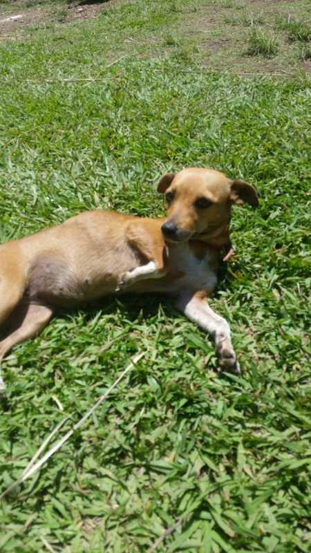 Doe ração arrecadação de raçao cães gatos natal sem fome comunicat.pet