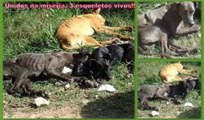 Ração pra Gato e Cachorro Contamos com a Solidariedade de todos!