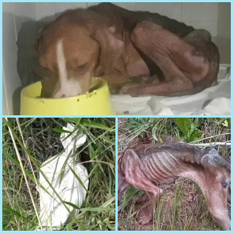 Ajude a salva a vida deste amiguinho de 04 patas 🐕🐕🙏🙏!!