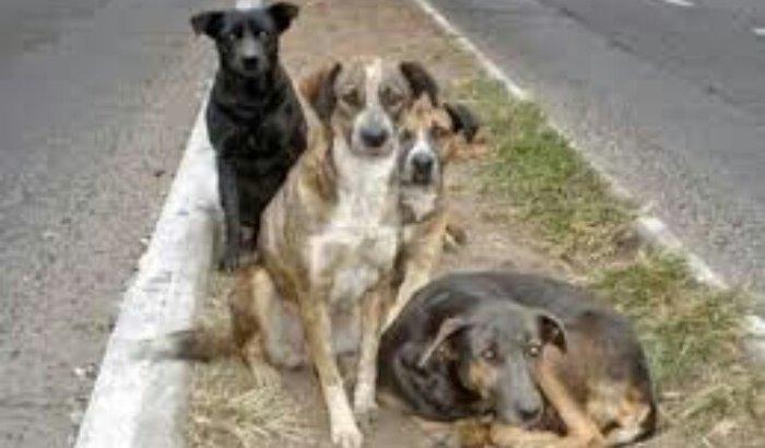 Ajude os cão de rua
