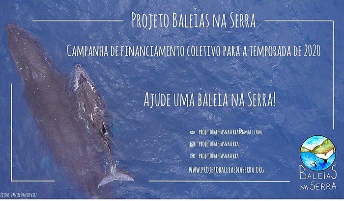 Projeto Baleias na Serra - temporada 2020