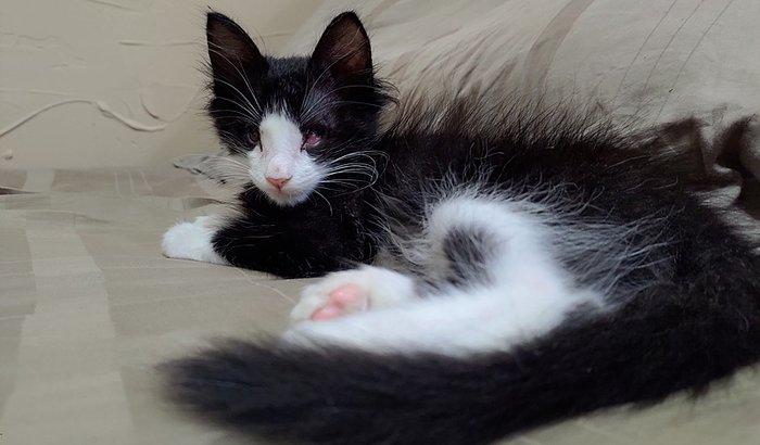 Cirurgia Azeitona (Gato é Vida)