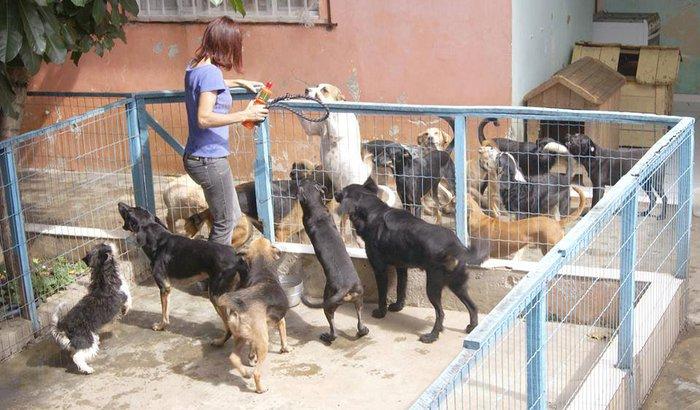 AJUDE OS ANIMAIS DO LAR DA REGINA