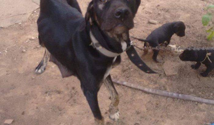 Ajude a pagar a conta da cadela Dina na clinica veterinaria