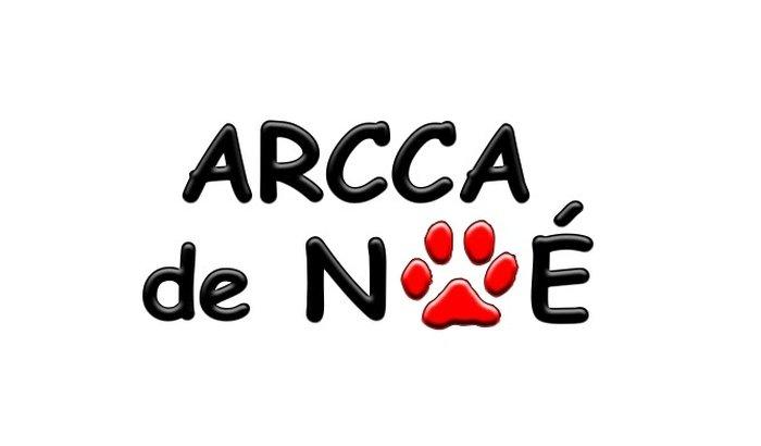 """Ajude Nossa """"ARCCA DE NOÉ"""""""