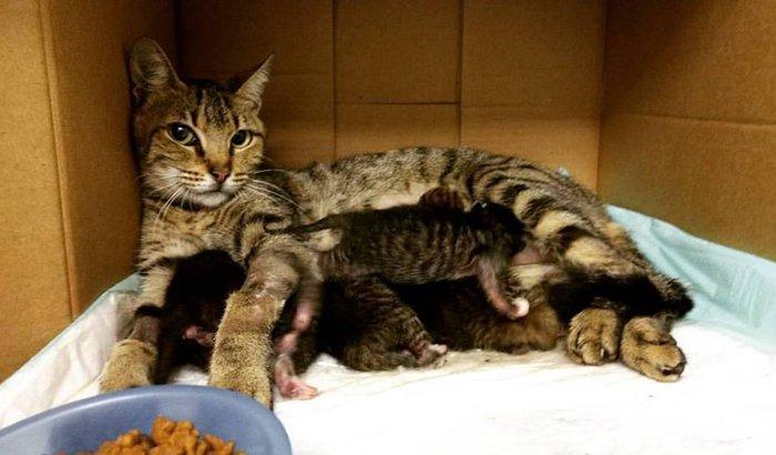 Ajuda para os filhotes e a mãezinha de Laranjeiras
