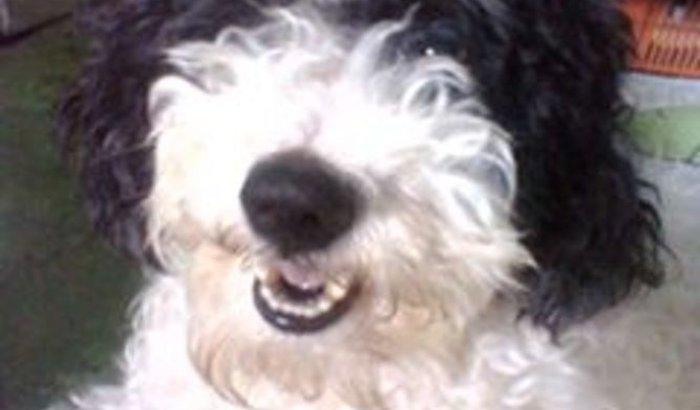ajudem a salvar meu cachorro