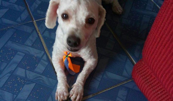Doação para Ração canina