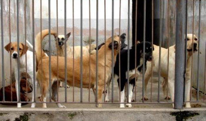 Ajuda ao animais do meu abrigo!