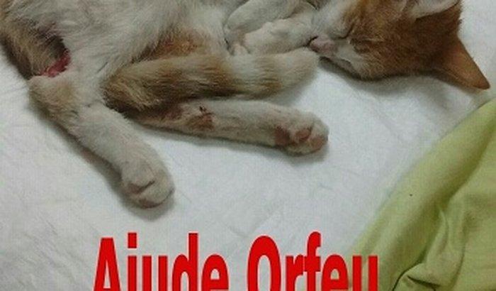 Ajude Orfeu a andar novamente!