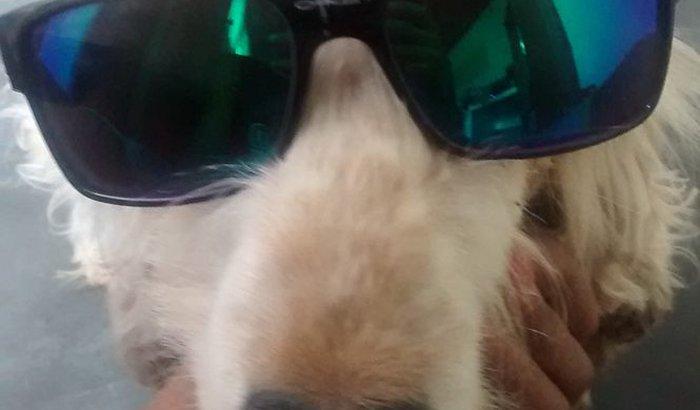 Salvem minha cachorra