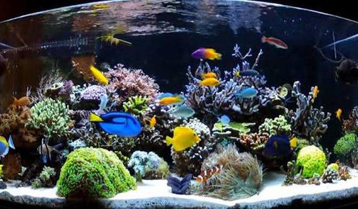 Projeto Aquario Marinho