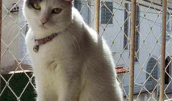 Tratamento para gata adotada - Griselda