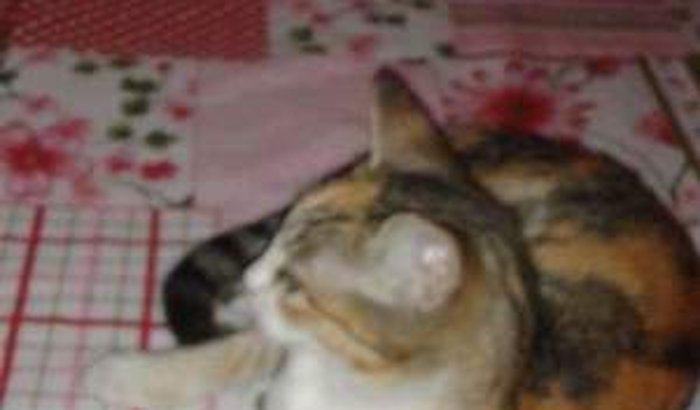 Auxilio para castrar a gatinha