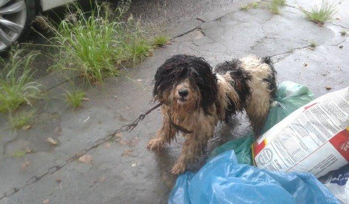 Doações de rações para Cães e Gatos de rua