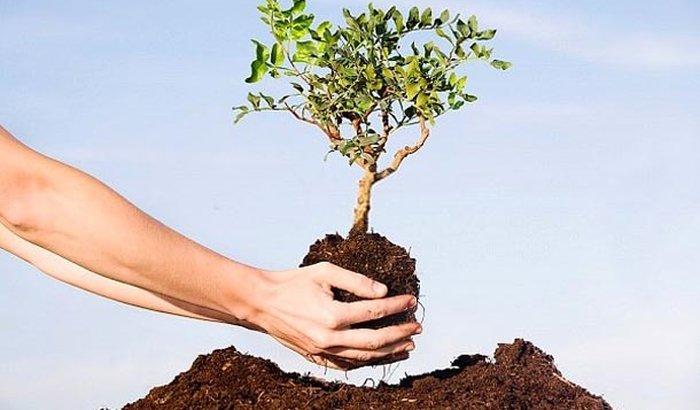 Projeto Verde Vida