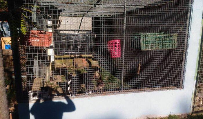 ONG AMALO - Reforma do gatil e vacinação dos animais