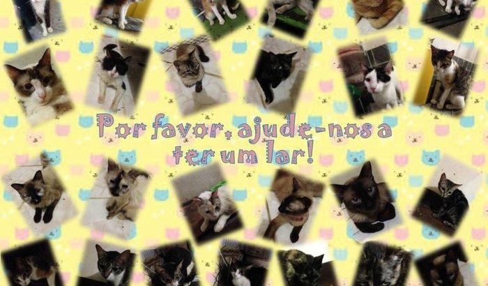 Ajude os gatinhos de Sepetiba/RJ a ter um lar