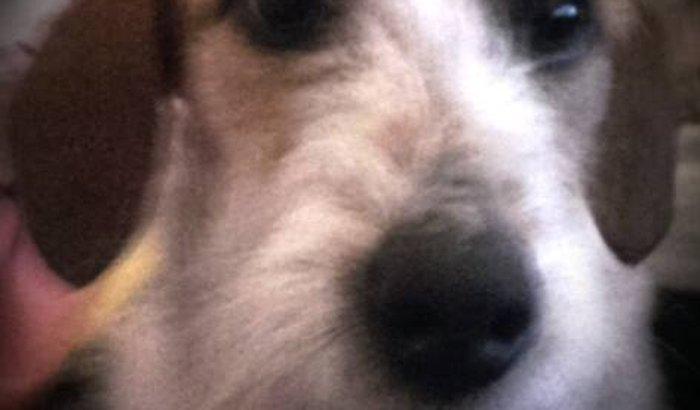 Popó, meu cãozinho