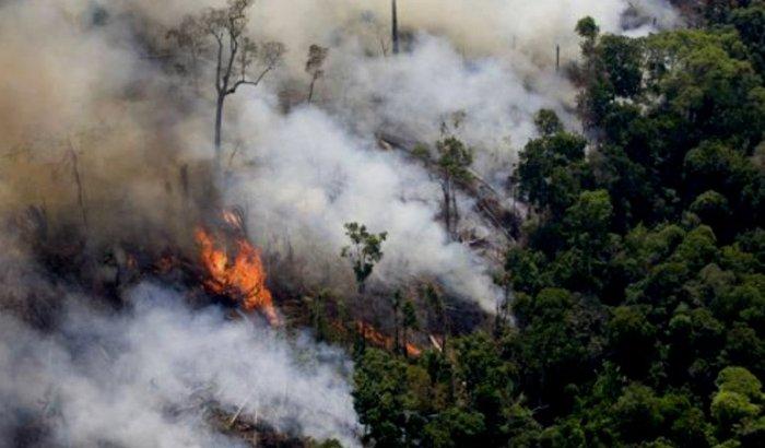 Contribuir com o reflorestamento em áreas degradadas