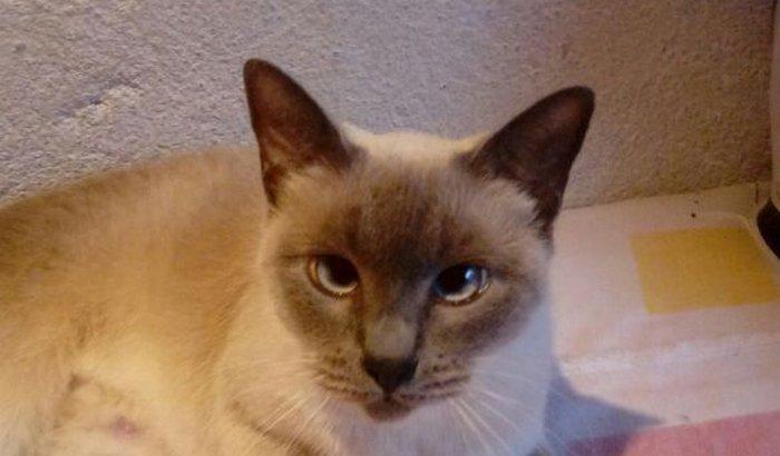 Ajuda para a  gatinha Dengosa com suspeita de câncer!