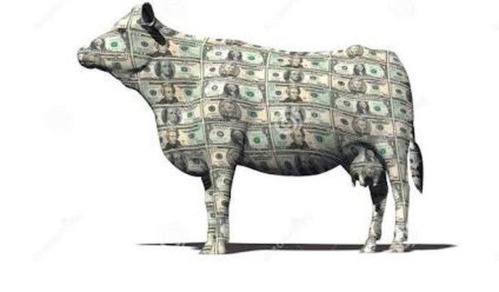 Vaquinha Financeira