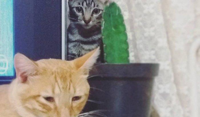 Castração dos gatinhos