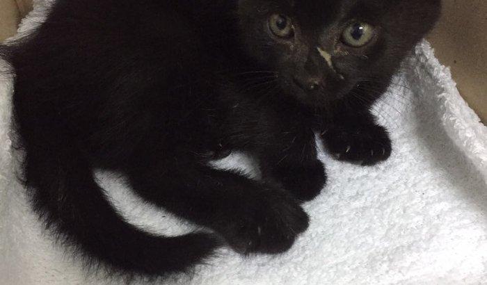 Ajuda para cirurgia do gatinho