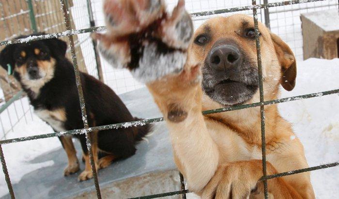 AJUDE ANIMAIS DE RUA! CACHORROS ABANDONADOS