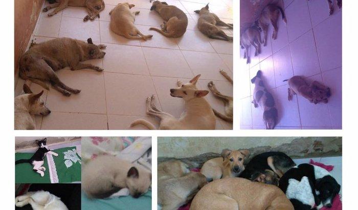 Socorro para os Animais Abandonados de Sousa-PB