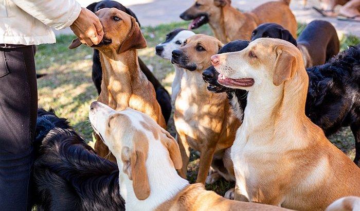 Ração pros cães da Arca