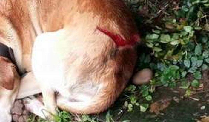 Salvar o Cachorrinho