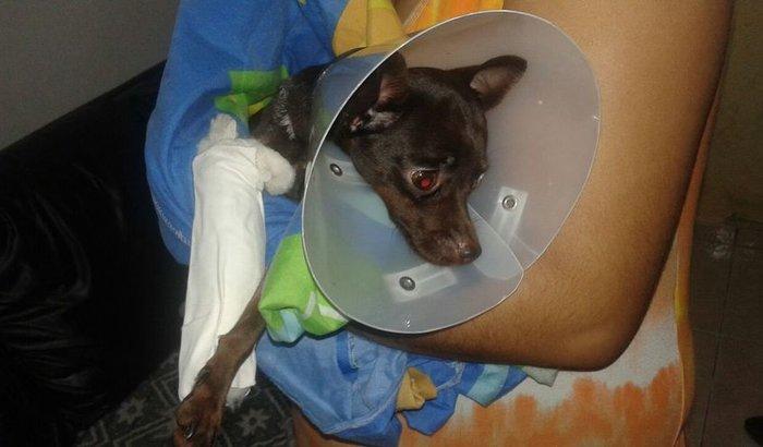 Cirurgia cadelinha Belinha