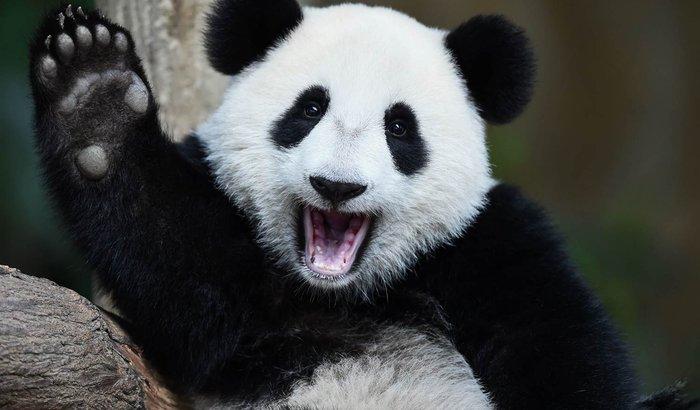 Ajudar nosso amigo Bruno a compra uma fantasia de panda