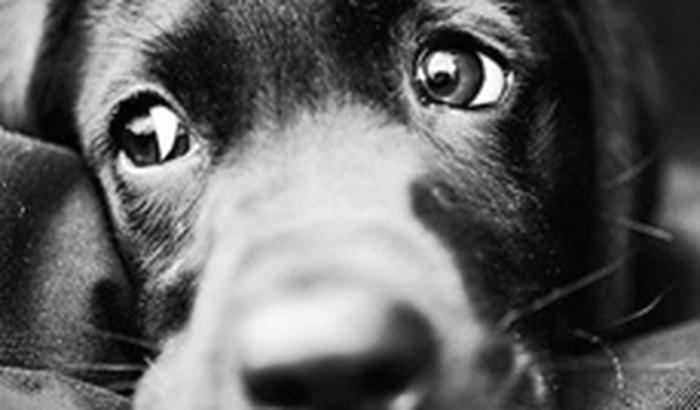 Projeto Social Pêlos Animais