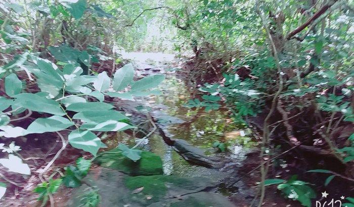 Reflorestamento do Rio Grande