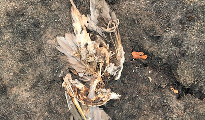 O PANTANAL PEDE SOCORRO: Ajude os animais e o povo Pantaneiro
