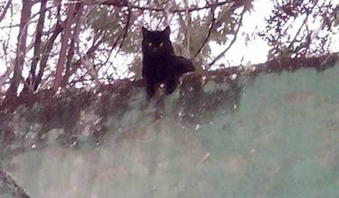 Captura e Castração de Gatos Comunitários