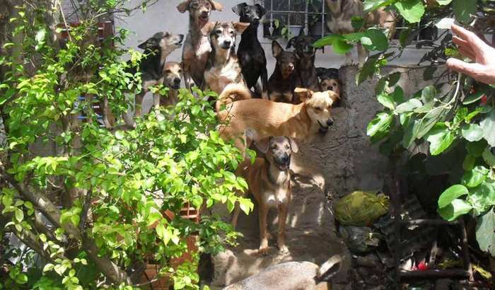 Cães e gatos com fome