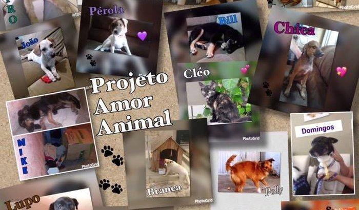 Ajuda para animais auxiliados pelo Projeto Amor Animal.