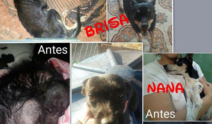 Apoio para o tratamento de animais carentes