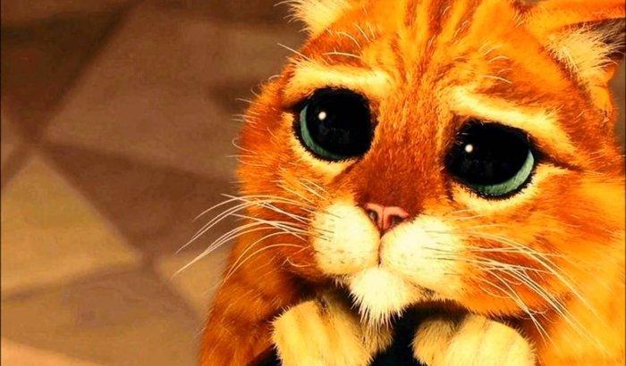 Ajude a tratar dos gatinhos abandonados.