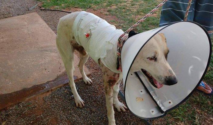 Precisamos de ajuda para pagar cirurgia do meu cachorro