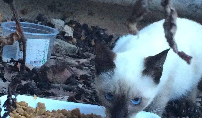 Alugar imóvel residencial para abrigar 30 gatinhos Resgatados