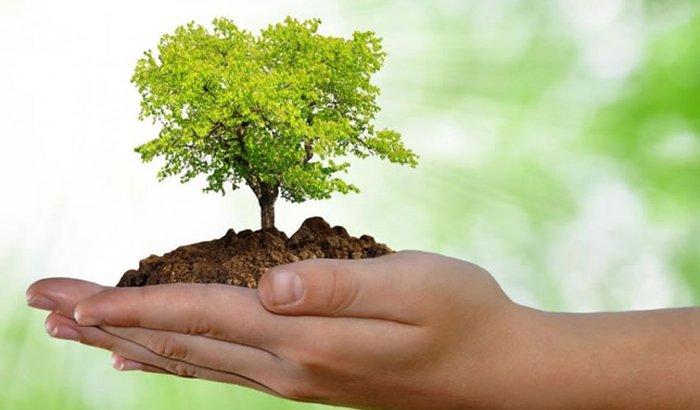 Ajude a instituição CDMA (Conservadores do meio ambiente)