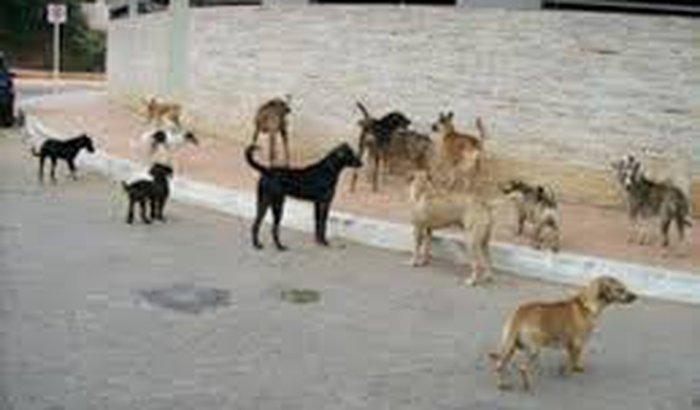instituto animal