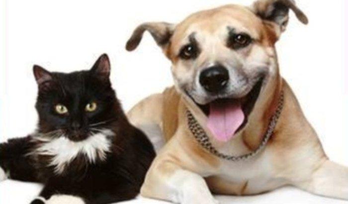 Proteção dos Animais de Califórnia -PR