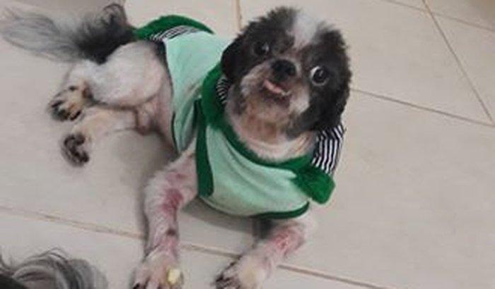 Ajude a salva a vida do Dominike
