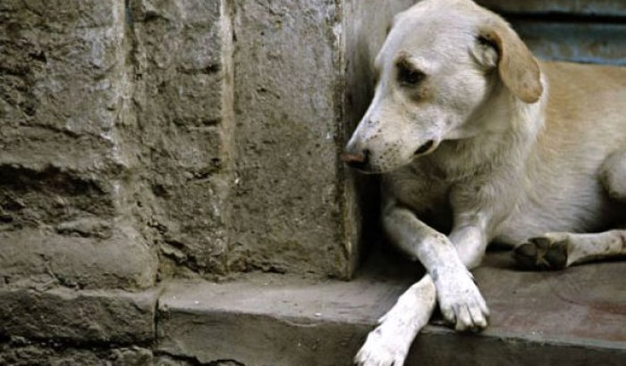 Criação  de um abrigo  para Animais abandonado!