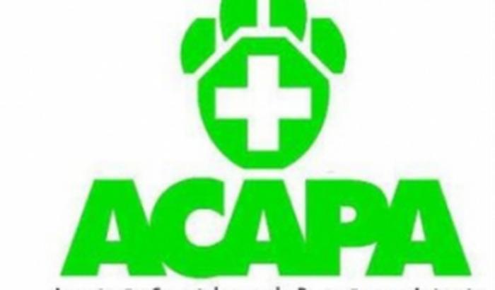 Ajude a ACAPA de Carazinho a salvar animais do abando.